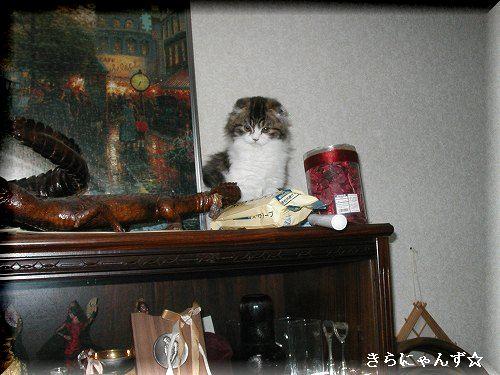 ルイ、飾り棚の上・2