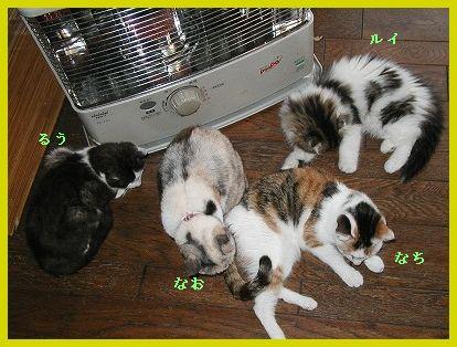 猫とストーブ・3