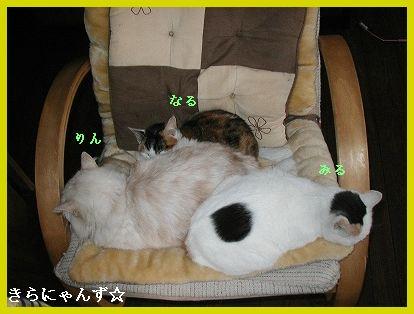 猫とソファー・1