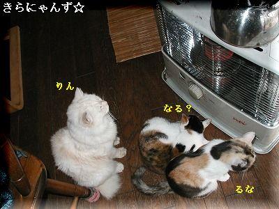猫とストーブ・4