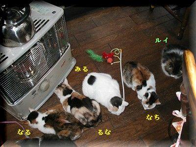 猫とストーブ・5