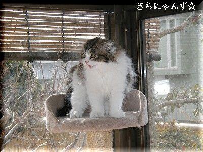 猫部屋のタワーの上