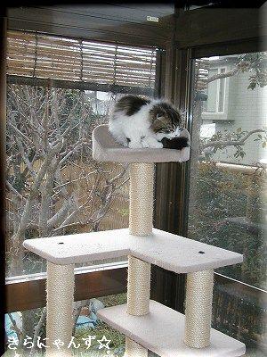 猫部屋のタワー・2