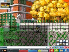Maple0009_20080202022838.jpg