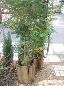 2008-01-12_05.jpg
