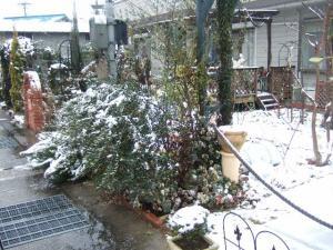 2008-01-29_03.jpg