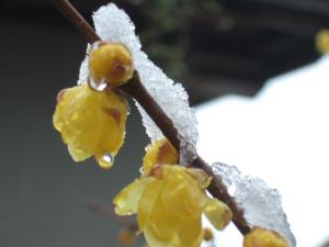 2008-01-29_10.jpg