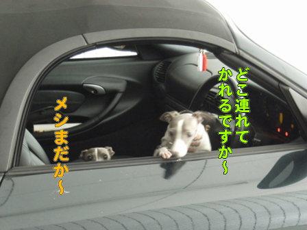 20080210_01.jpg