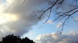 2012.1.23大神神社9