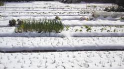 2012.2.18積雪の午後1