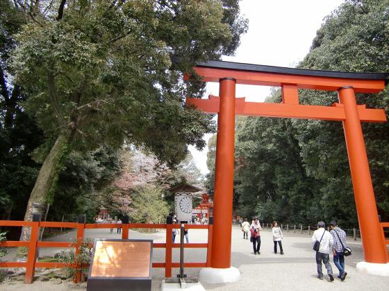 京都の桜2012-下鴨神社04