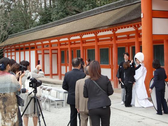 京都の桜2012-下鴨神社06