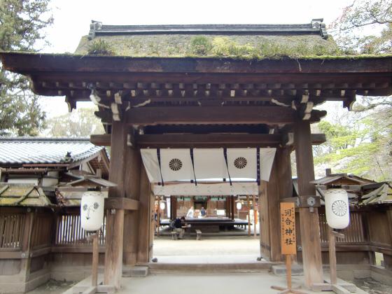 京都の桜2012-下鴨神社18