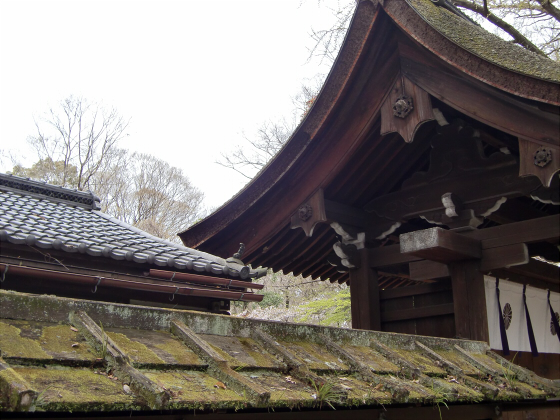 京都の桜2012-下鴨神社20