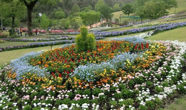 花全体の写真