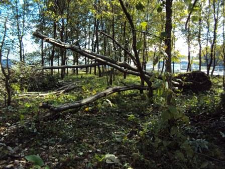 枝を切り倒した倒木