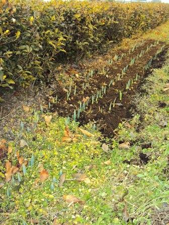 野草と水仙