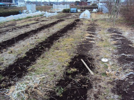 自然農法の畑
