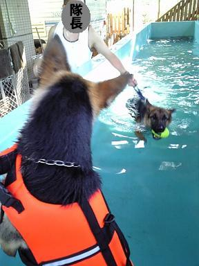 デンクロ♪深いプールで…