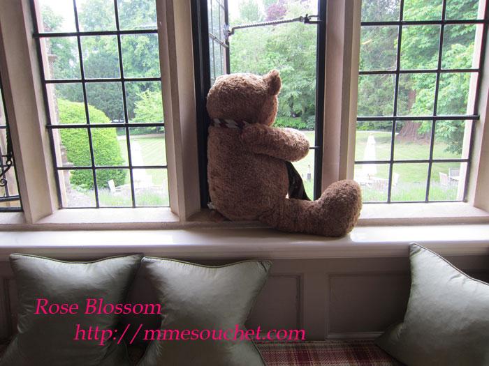 bear20110605.jpg