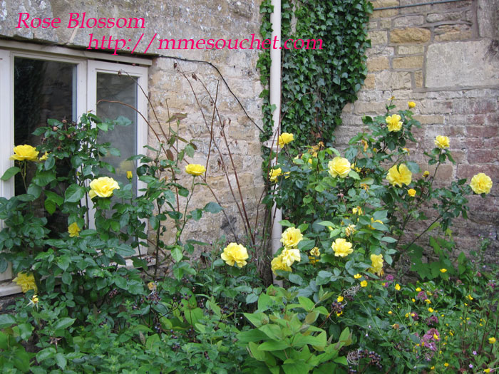 rose201106051.jpg