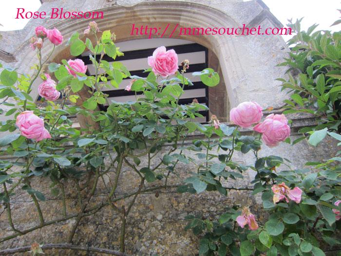 rose201106053.jpg