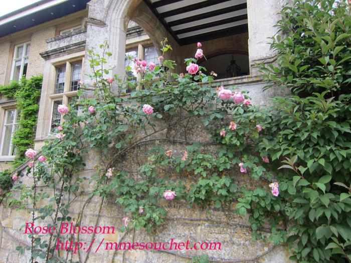 rose201106059.jpg