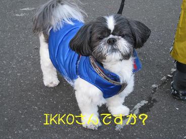 IKKOさん?
