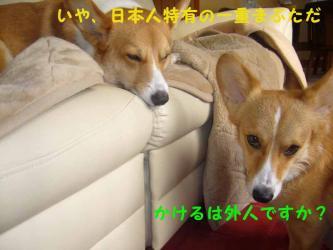 3.32dogs1.jpg