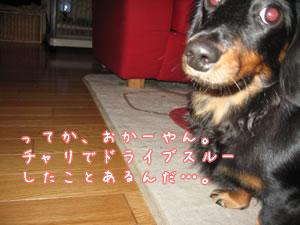 20071112_04.jpg