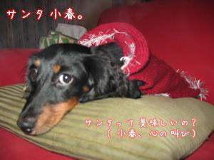 20071116_02.jpg