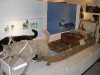 北極圏の旅で使われた犬ぞりが展示されている