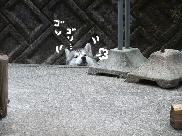 sarashikubi2.jpg