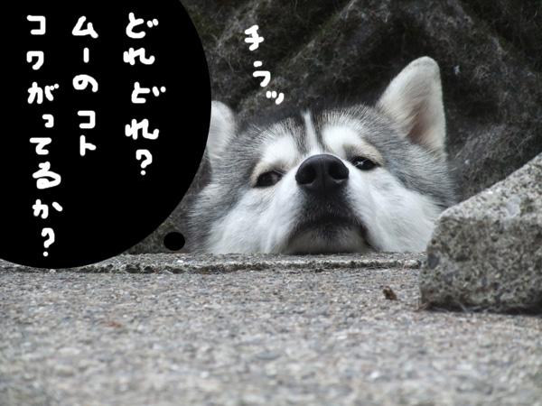 sarashikubi3.jpg