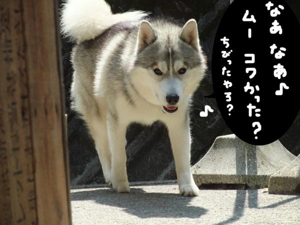 sarashikubi7.jpg