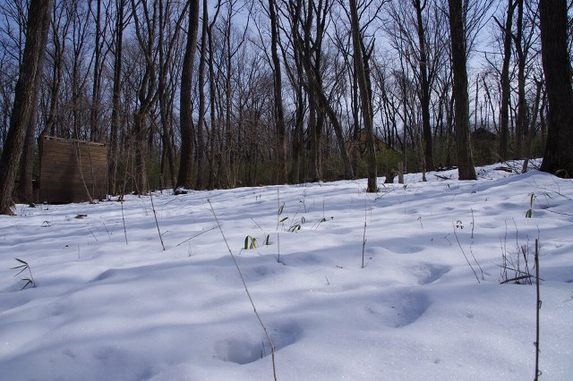 2012-2-13-1s.jpg