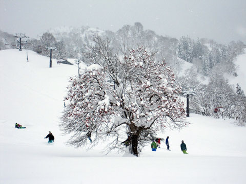 木に願いを