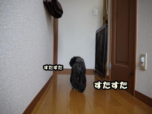 P1100083.jpg