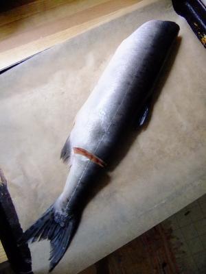 salmon_convert_20130828091441.jpg