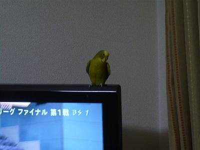 kotaroP1010432.jpg