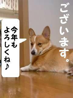 画像-0003