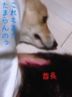 画像-0020
