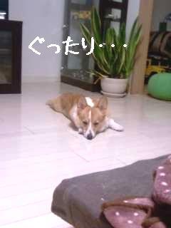 画像-0008
