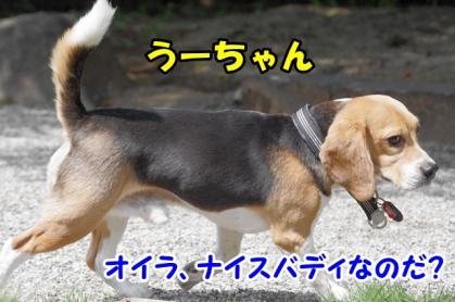 集会 4 うーちゃん