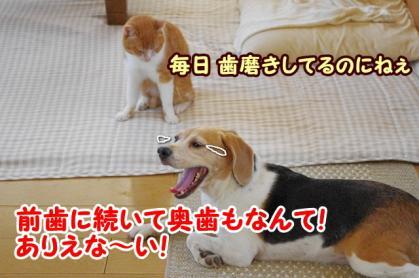 災難なお口
