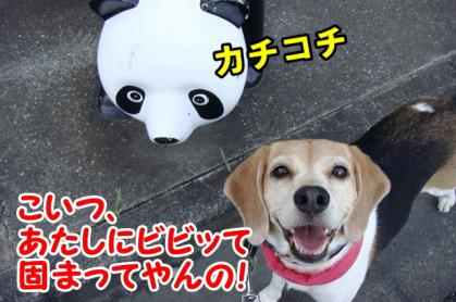 パンダ 3