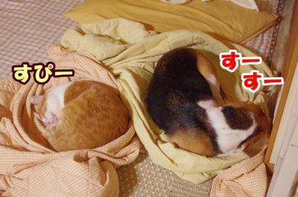 ベッド 3