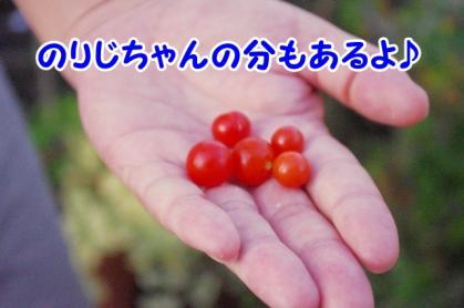 トマト 3