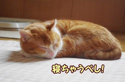 お休み 4