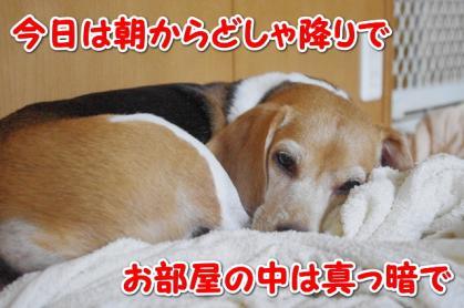 お休み 1